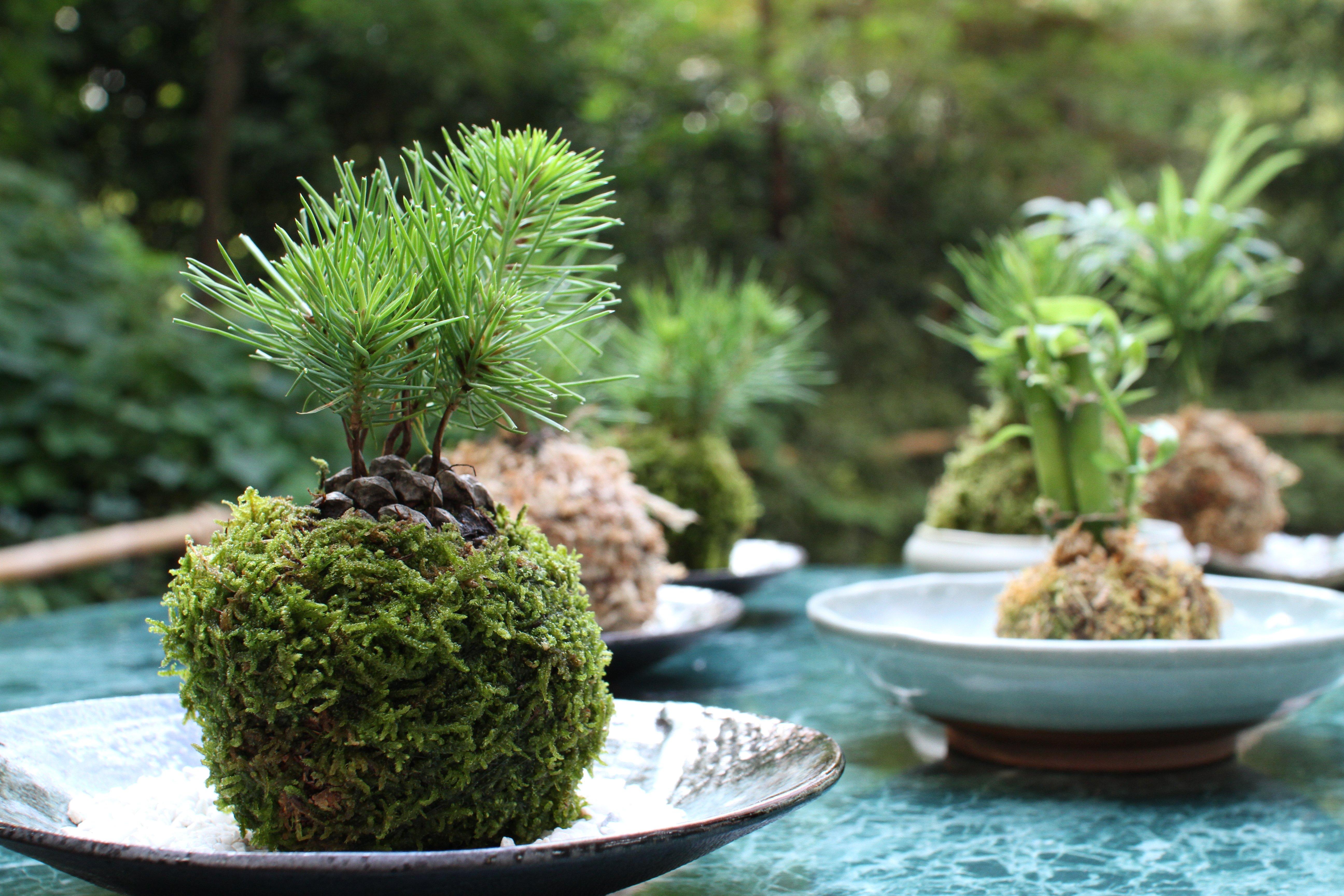 913 for Vendita piante ornamentali