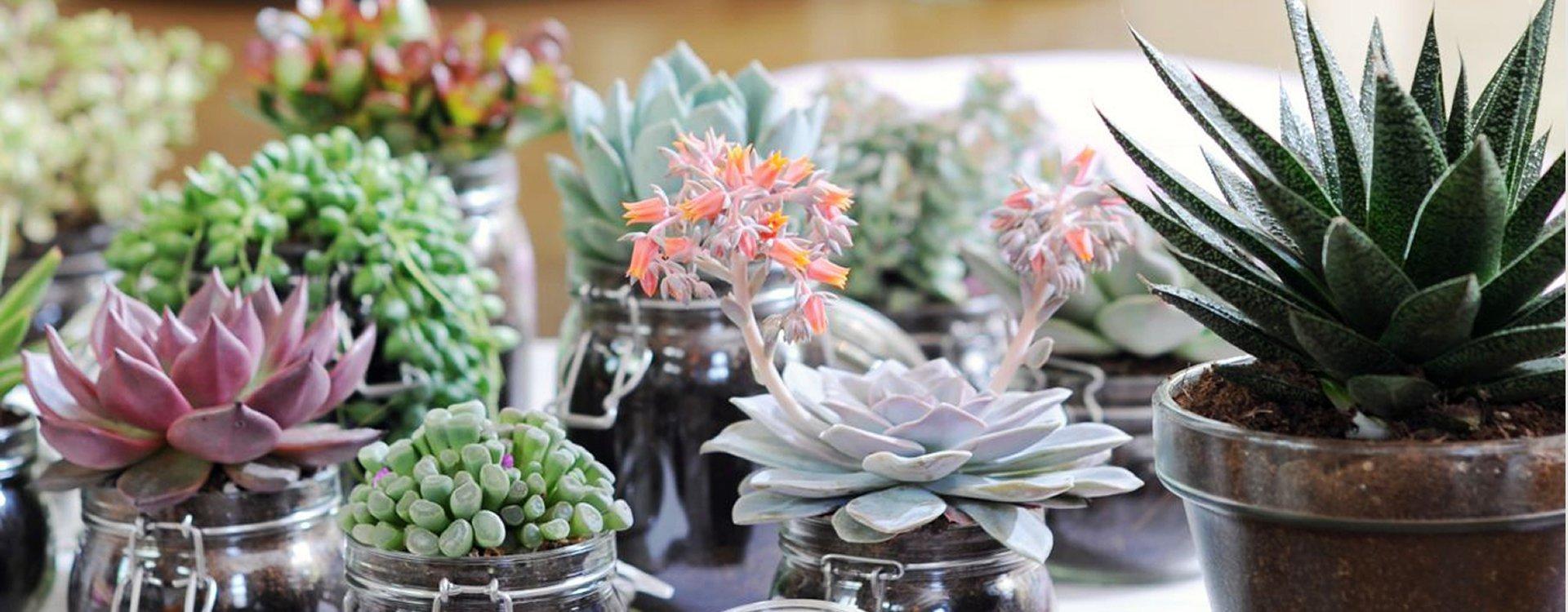 Composizionidafne for Vendita piante ornamentali