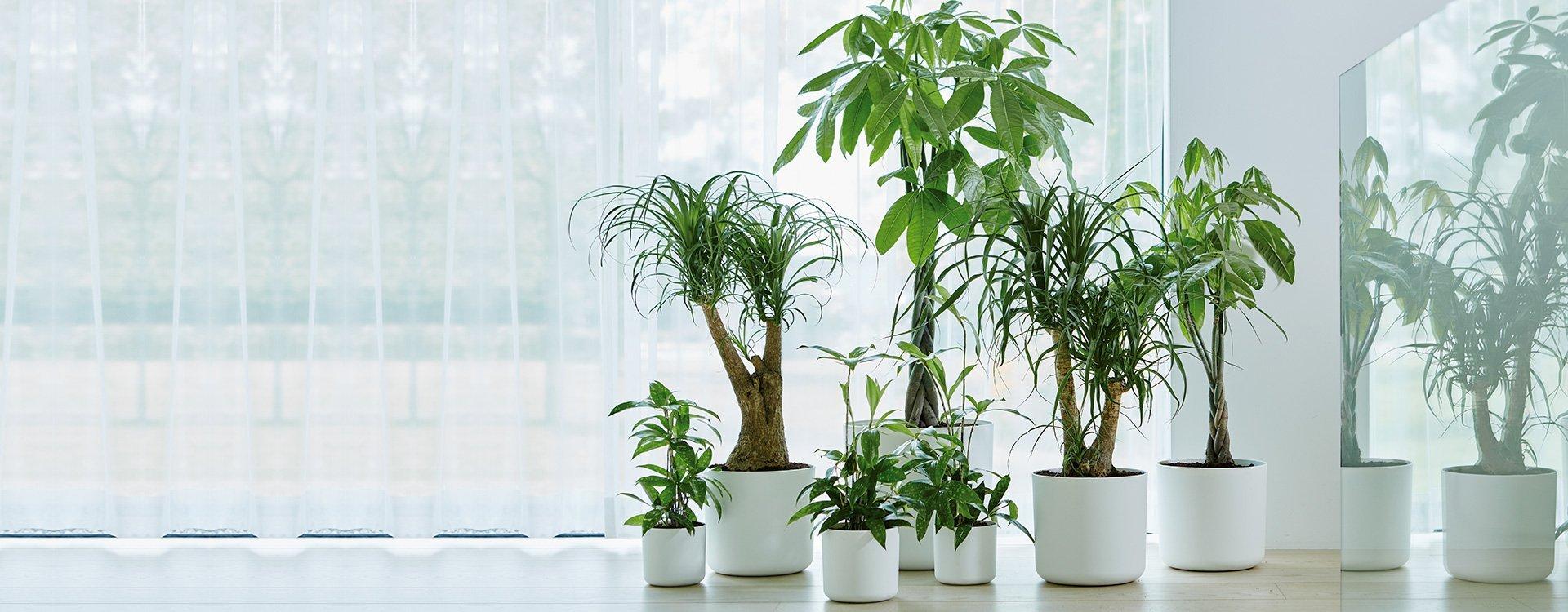 Venditapianteingrossoroma for Vendita piante ornamentali